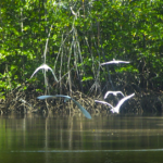 Kayak Through Mangroves
