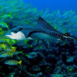 Snorkel Caño Island